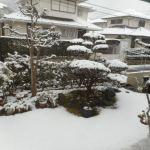 菜園日記:2回目の積雪