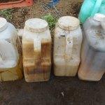 肥料づくり:米の研ぎ汁の発酵(1)