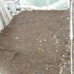 イチゴ:育苗床づくり
