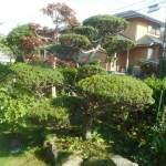 菜園日記:庭木の剪定(3)