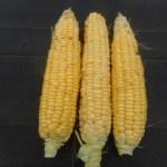 トウモロコシ(2):収穫を始める