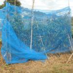 ピーマン:9回目の追肥と17号台風対策