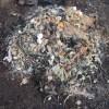 グリーン堆肥づくり:No.13G堆肥の仕込み(1)