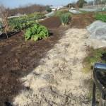 枝豆:土づくり