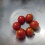 ミニトマト(1):収穫を始める