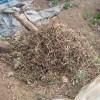 中玉スイカ:残渣の処理