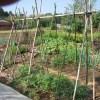 ミニトマト(1):合掌式支柱を撤去する