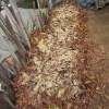 落葉堆肥づくり:10回目の仕込み