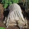 サトイモ:種イモ貯蔵室をPOフィルムで囲う