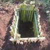 サトイモ:イモを貯蔵する室の整備