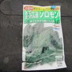 ホウレン草(2):播種
