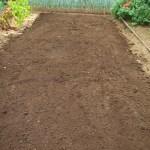 緑肥用麦:土づくり(1)