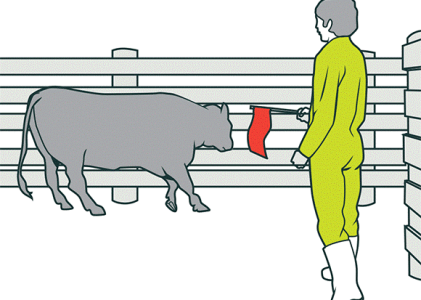 Cattle Handling: The Importance of Consumer Knowledge to The Beef Sector