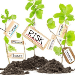 genome editing plants: risk or opportunity?