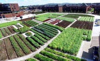 intensive green roof being used for food production.