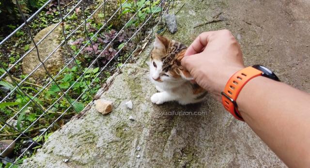 Mesilou Cat Village