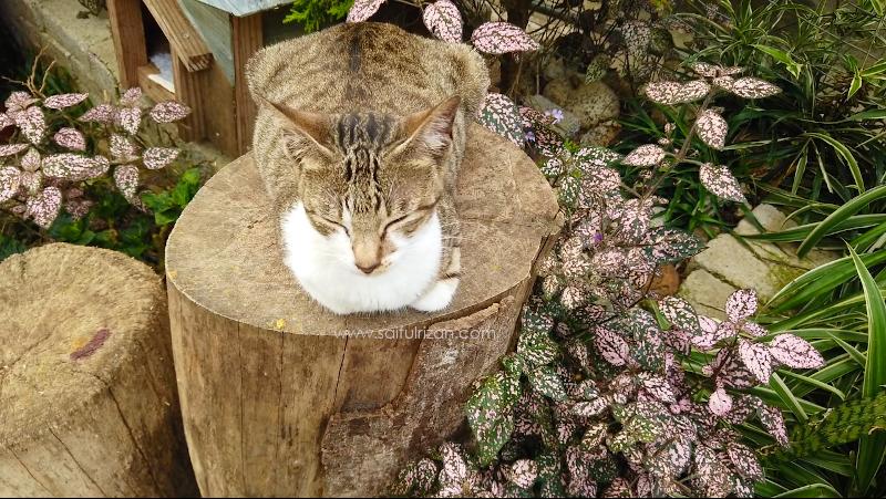 Kucing jinak di Mesilou Cat Village