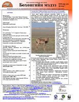 Mongolian_Issue_7