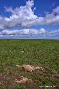 Saiga deaths on the Steppe_web