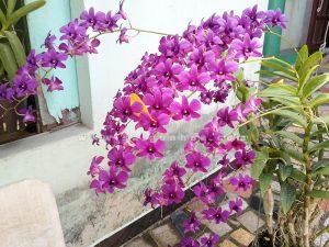 canh hoa lan dendro
