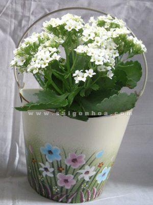 chau hoa song doi trang