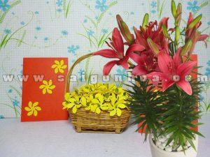 hoa lily tet4