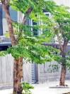 giang-huong-co-thu-trong-tren-duong-300x400
