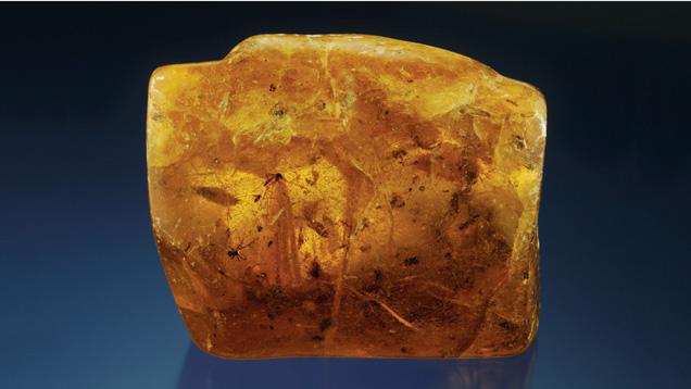 Hổ phách thô, rough amber