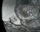 På ett bord låg en porträttbild av mig vid sidan av en kristallskål