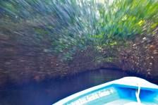 Zipping through the mangroves