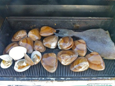Chocolate clams and trigger fish..yum