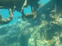 Snorkeling the wreck