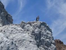 Osprey being stalked by Sue