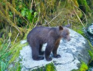 One of the cubs