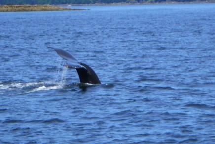 A whale goodbye