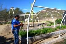 Jose picking our veggies