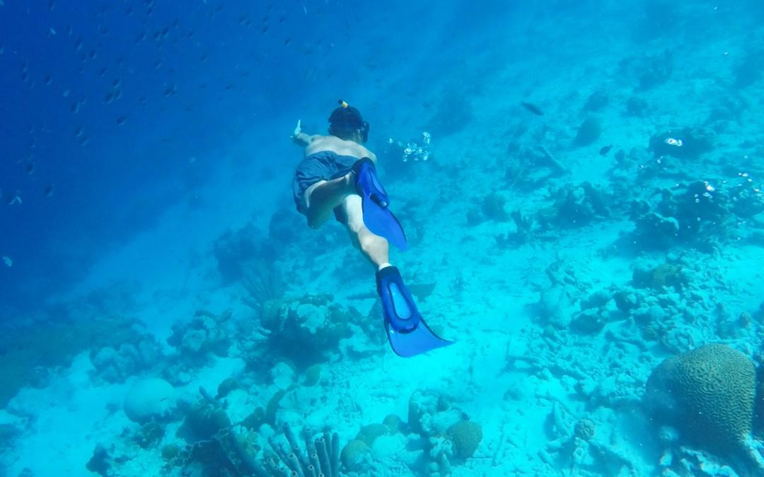 Traumhafte Unterwasserwelt auf Bonaire