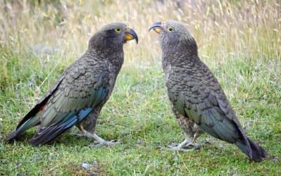 Unsere TOP 10 Orte der Südinsel von Neuseeland