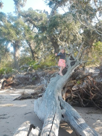 This beach definitely rivaled Driftwood Beach on Jekyll Island for us. Plus, perfect climbing trees for Claire!