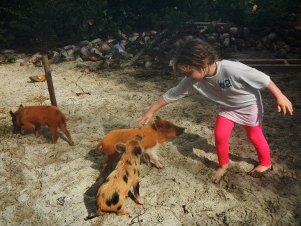 Feeding the wild pigs on NoName Cay, a hop across from Pelican Cay