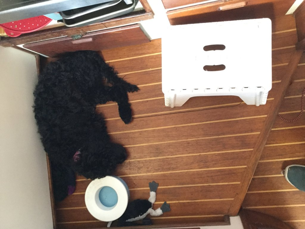 25 pound puppy takes us half the galley floor
