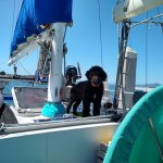 Portugues Water Dog standing behind the traveler in our ketch