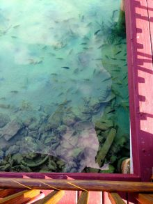 This was the view from Big John's as I waited for our lunch to be prepared. A million little fishes swimming around.