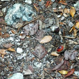 Little hermit crabs littered the path to the blue hole.