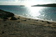 iguana sill