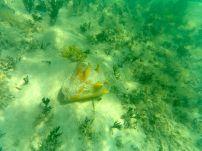 A live conch!
