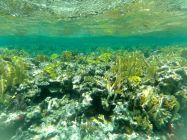 Probably some of the best snorkeling we've seen...