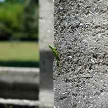 Critter #4. A lizard!