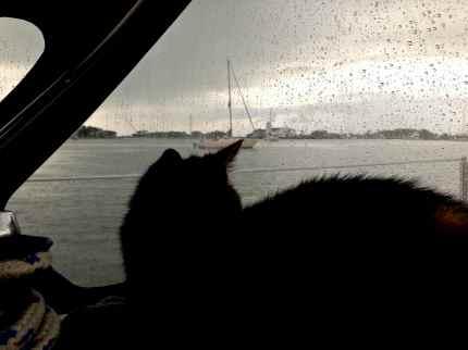Leo watching it rain.
