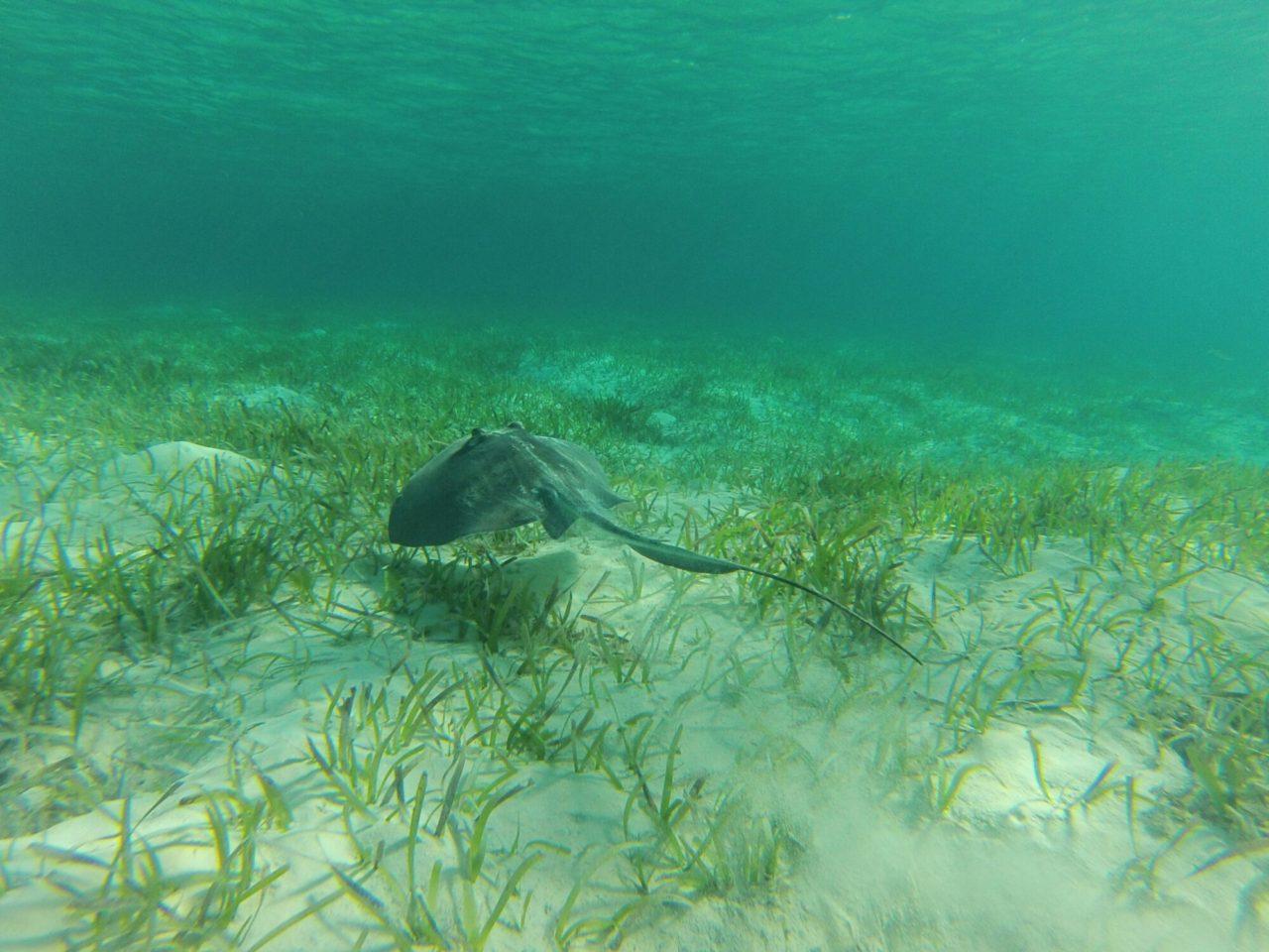Norman cay and shroud cay exuma bahamas sailing luna sea norman cay and shroud cay exuma bahamas sciox Images